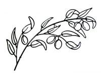 brancheolivier