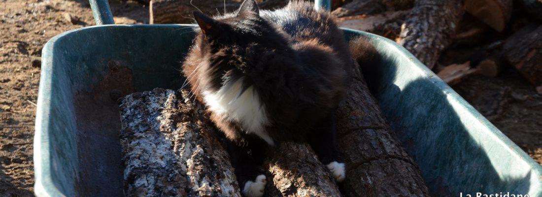 Black Jack et le bois